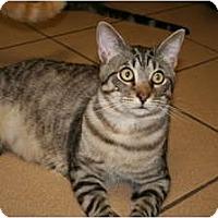 Adopt A Pet :: Newman - Bonita Springs, FL