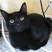 Adopt A Pet :: Hansie - Davis, CA