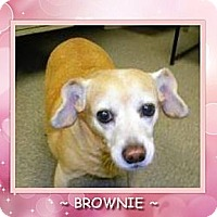 Adopt A Pet :: BROWNIE - Dallas, NC