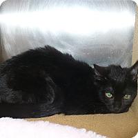 Adopt A Pet :: Eloise - Colmar, PA