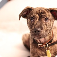 Adopt A Pet :: Riley - Romeoville, IL