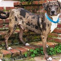 Adopt A Pet :: Tenor - Enfield, CT