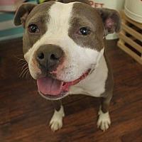 Adopt A Pet :: Margie-Foster Needed! - Detroit, MI