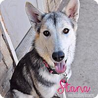 Adopt A Pet :: Stana - Carrollton, TX