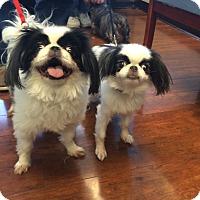 Adopt A Pet :: Lucia & Gigi - Oak Ridge, NJ