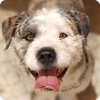 Adopt A Pet :: JAMESON - Kyle, TX