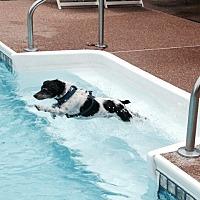 Adopt A Pet :: Buster - Columbia, TN