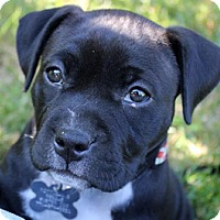 Adopt A Pet :: Ali - Framingham, MA