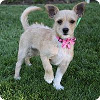 Adopt A Pet :: NINA - Newport Beach, CA