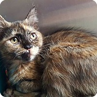Adopt A Pet :: Demi - Elyria, OH