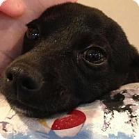 Adopt A Pet :: Herman - Centerville, GA