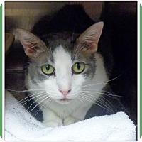 Adopt A Pet :: TRACE - Marietta, GA