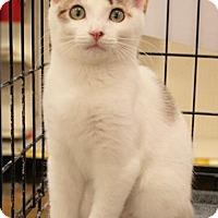 Adopt A Pet :: Wilma - Sacramento, CA
