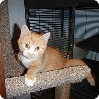 Adopt A Pet :: Moppet - North Wilkesboro, NC