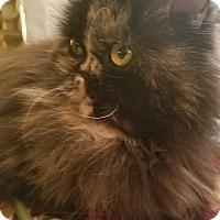 Adopt A Pet :: Dolce - Columbus, OH