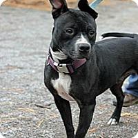 Adopt A Pet :: Pedro - Tinton Falls, NJ