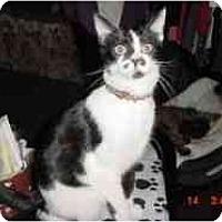 Adopt A Pet :: LaRue - Pasadena, CA