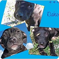 Adopt A Pet :: Dakota - Sylvania, OH