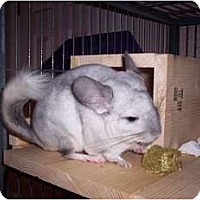 Adopt A Pet :: Dudley - Avondale, LA