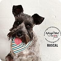 Adopt A Pet :: Rascal - Omaha, NE