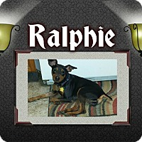 Adopt A Pet :: Ralphie - LaGrange, OH