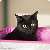 Adopt A Pet :: Olive - Fountain Hills, AZ