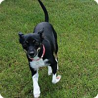 Adopt A Pet :: Bootsie - San Antonio, TX