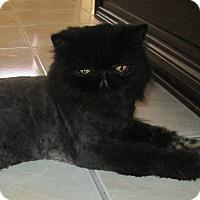 Adopt A Pet :: Jokers Wild - Gilbert, AZ