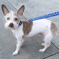 Adopt A Pet :: Tucker - Temecula, CA