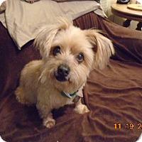 Adopt A Pet :: Misty - Alpharetta, GA