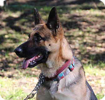 German Shepherd Dog Mix Dog for adoption in Walnut Creek, California - Katana