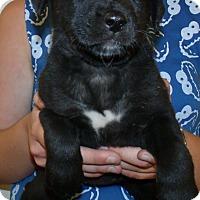 Adopt A Pet :: CHERUB - Corona, CA