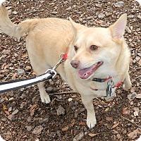 Adopt A Pet :: Foxy - Umatilla, FL