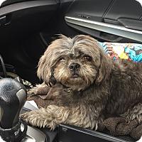Adopt A Pet :: Tyson - Waxhaw, NC