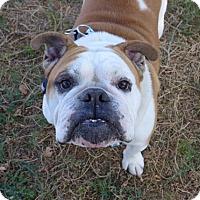 Adopt A Pet :: Rugby - Santa Ana, CA