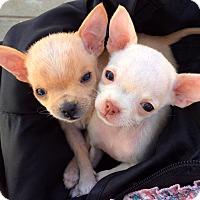Adopt A Pet :: Pinky & Peanut - Santa Monica, CA