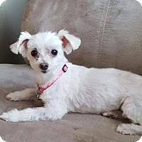 Adopt A Pet :: Bailey - Leduc, AB