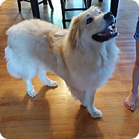 Adopt A Pet :: Boe - Aurora, IL