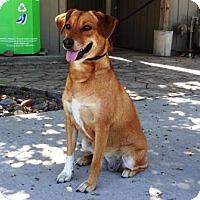 Adopt A Pet :: Zelda - Lathrop, CA