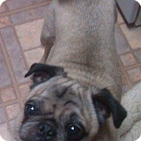 Adopt A Pet :: Mack - Greensboro, MD