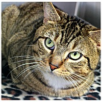 Adopt A Pet :: Mufasa - Forked River, NJ