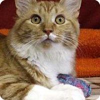 Adopt A Pet :: Marmoset - South Bend, IN