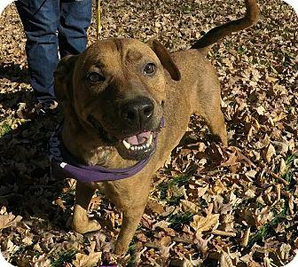 Retriever (Unknown Type)/Terrier (Unknown Type, Medium) Mix Dog for adoption in Detroit, Michigan - Zilla