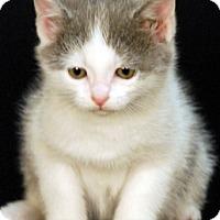 Adopt A Pet :: Elf - Newland, NC
