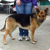 Adopt A Pet :: Ryker - Lathrop, CA