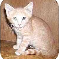 Adopt A Pet :: Marie & Donnie - Dallas, TX