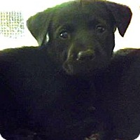 Adopt A Pet :: Onyx - Miami, FL
