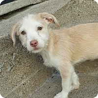Adopt A Pet :: Sandy*ADOPTED!* - Chicago, IL