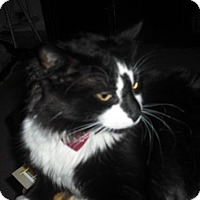 Adopt A Pet :: Icky Picasso Courtesy Post - Absecon, NJ