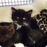 Adopt A Pet :: Beebie - Troy, OH